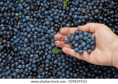 Blueberries as healthy diet for senior people. - stock photo
