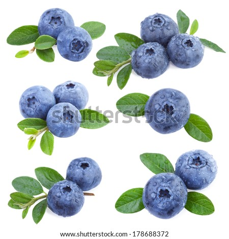 Blueberries Collection - stock photo
