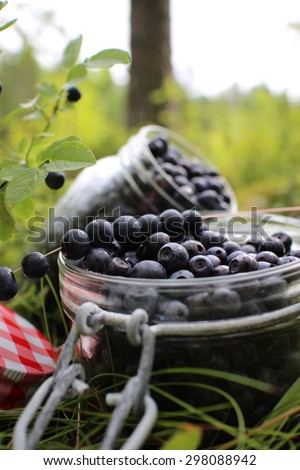 Blueberries in glass jar in forest at Finland