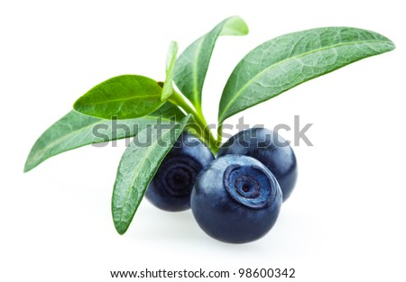 Blueberries with leaves isolated on white - stock photo