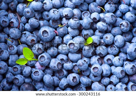 Blueberry background. Ripe and juicy fresh picked blueberries closeup - stock photo