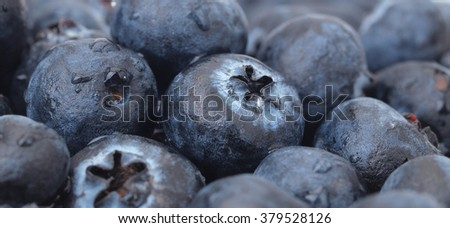 Blueberry fruit         - stock photo