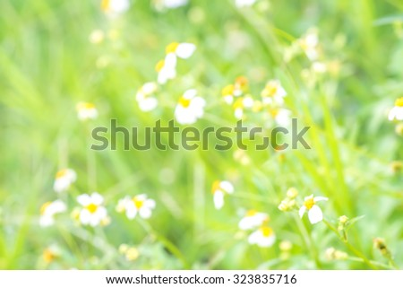 blur background of small flowers field