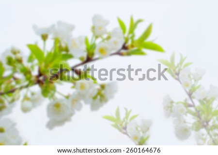 Blur cherry tree flower. Spring flowers blooming tree branches. Blurred background and bokeh in the background of the text, design, advertising, popular trends. For a background image to insert text. - stock photo