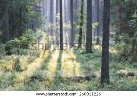 Blur forest in morning - stock photo