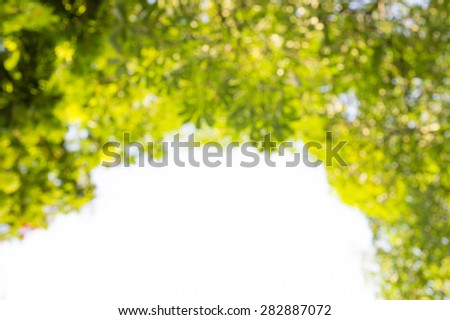 Blur green leaves and branches Natural background