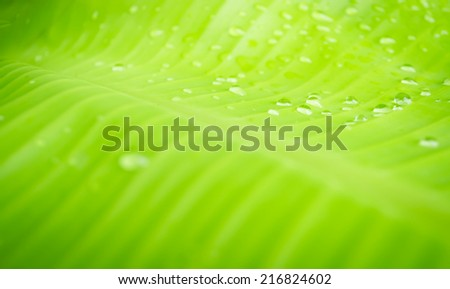 blur green of banana leaf with water drop for nature background