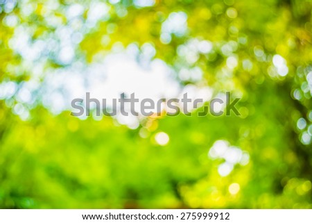 blur image of Abstract Bokeh of tree green color background .