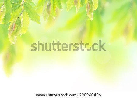 Blur nature background. Ecology Business Happy New Life Thank You Card 2017 2016 Tree Light Yellow Green White Leaf Zen Spa Bright Bokeh Blurry Abstract Scene View Pastel Art Flora Web Save concept.  - stock photo