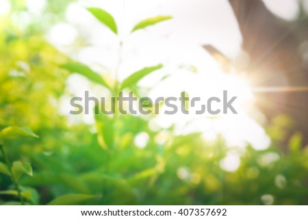 Blur of close up fresh green abstract and sunlight.For create nature background concept - stock photo
