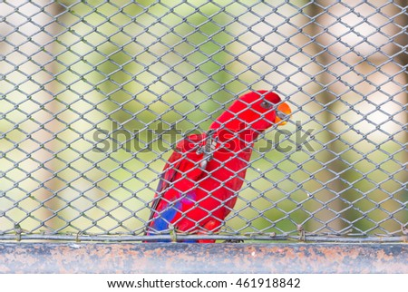 Blur of Red parrots birds inside in a cage and focus at the legs and cage