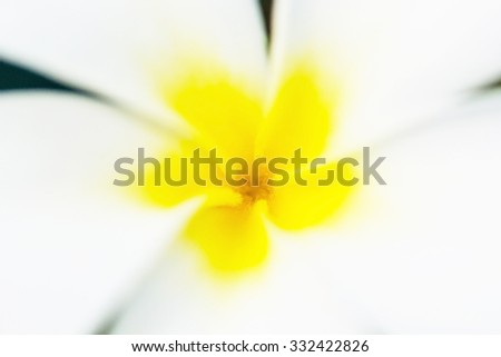 Blur single Plumeria flower - stock photo