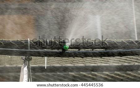 Blur sprinkler watering.(Selective focus) - stock photo