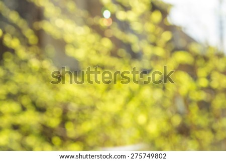 Blured photo of young bush branches with little fresh green leaves in sun shine garden outdoors - stock photo