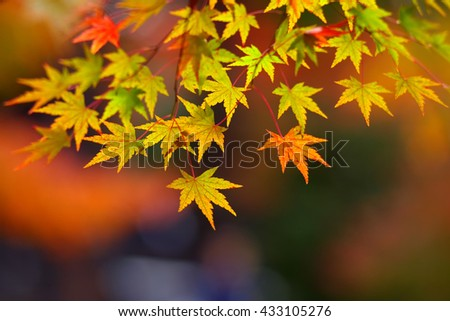 Blurred Abstract Maple Leaf , Background.