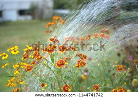 stock-photo-blurred-action-watering-of-f