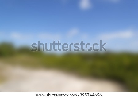 Blurred background - mangrove forest - stock photo