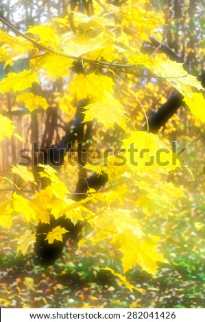 Blurred background of autumn maple leaves with nice bokeh