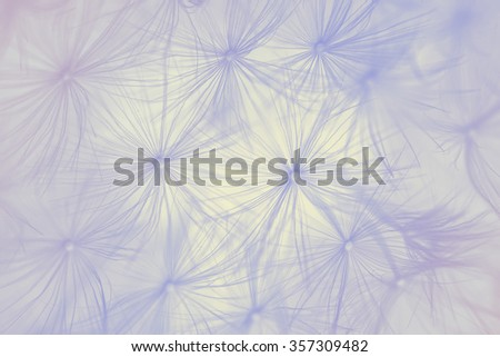 Blurred background of dandelion- Soft filter