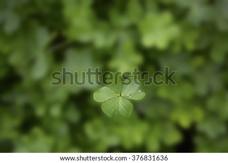 Blurred background of green shamrock clover, with one leaf in focus, for St Patricks Day.  - stock photo