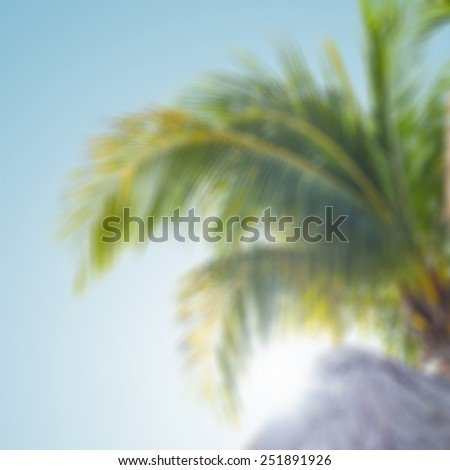 Blurred background of palm tree - stock photo