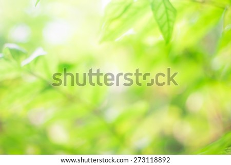 Blurred beautiful nature background:blurry of leaf and forest trees backdrop concept:blur of green natural park environment ecological conception:spring/summer hours:sunshine sparkle light:better life - stock photo