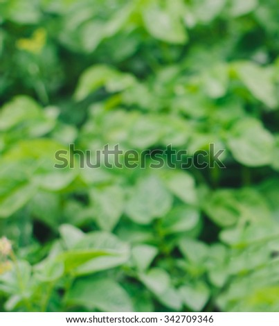 Blurred defocused photo of the green grass in garden - stock photo