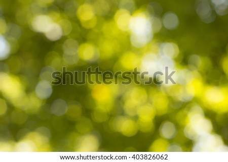 Blurred Foliage Background./ Blurred Foliage Background
