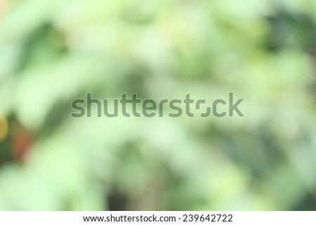 blurred forest background - stock photo