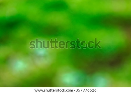 Blurred forest foliage as a backdrop. - stock photo