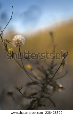 Blurred glow flowers on a cold morning, high dynamical range image