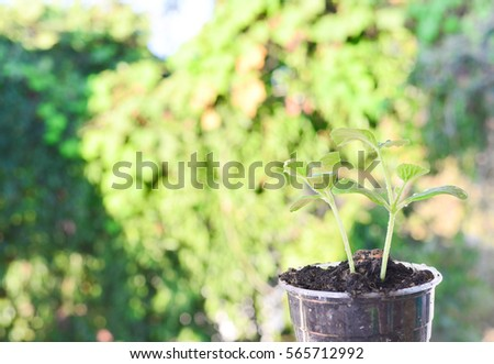 Blurred Green Growing plants