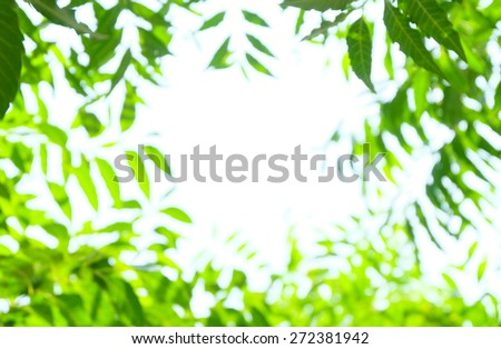 blurred green leaves background, spring. - stock photo