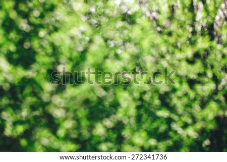 blurred green leaves background, spring concept - stock photo