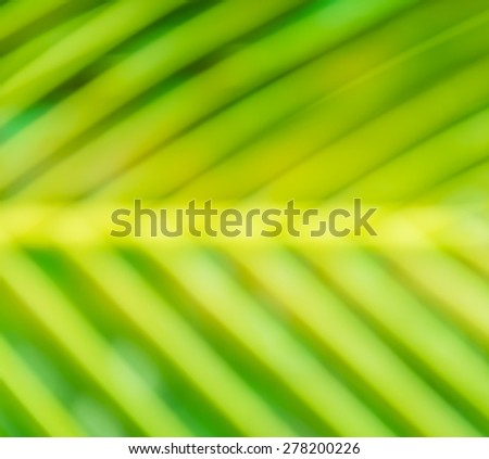 Blurred green palm leaves - stock photo