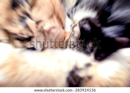 blurred image of little cats suckling their mother - stock photo