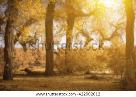 Blurred image  spring time with yellow tree  and cross process and soft flare filter near China
