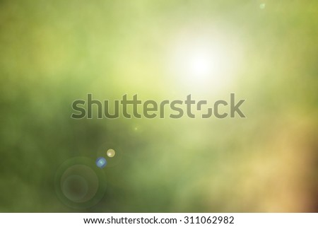 Blurred leaf on tree background with sunlight.