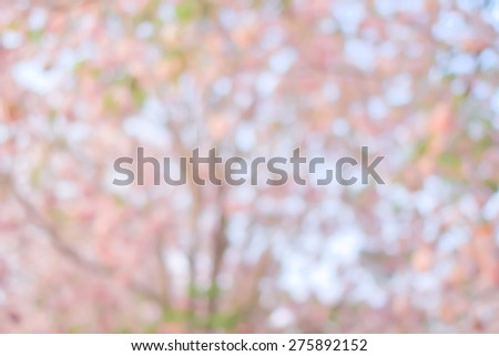 Blurred nature backgrounds,blurred backgrounds concept:blurry of leaves and forest flowers backgrounds concept : blur of natural park environment concept:spring and summer concept.out of focus concept - stock photo