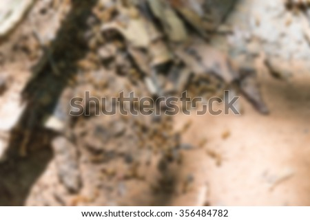 Blurred of Termite on soil floor and dry leaf - stock photo
