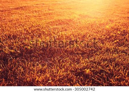 blurred orange autumn background - stock photo