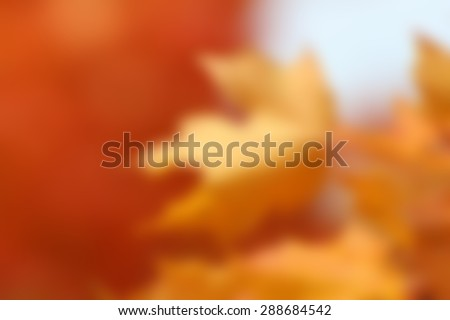 blurred orange maple leaves, blank autumn design for adding your own typography text or image for fall backgrounds or Thanksgiving - stock photo