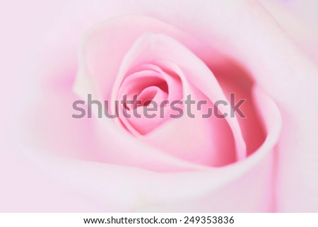 Blurred pale pink rose background. - stock photo