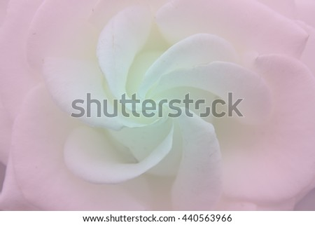 Blurred pink blue color background of rose