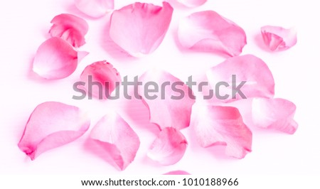 blurred pink rose  petals on white backgrounds. valentine