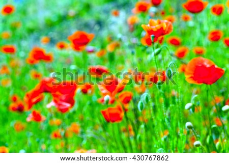 blurred poppies background or texture