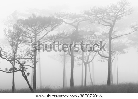 Blurred Silhouette trees in the forests with fog in winter for background - stock photo