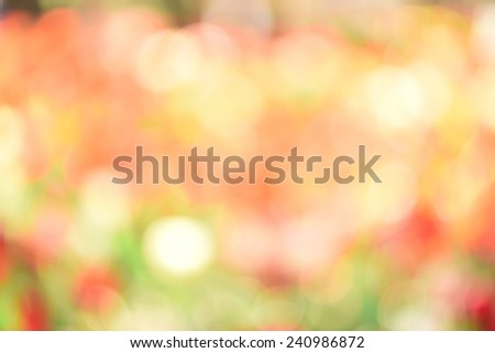 Blurred tulip tree, useful for background. - stock photo