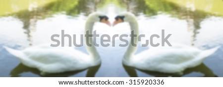 Blurred twin Swan Lake; love concept ; couple concept. - stock photo