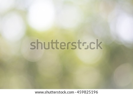Blurry abstract natural green from tree bokeh effect. - stock photo
